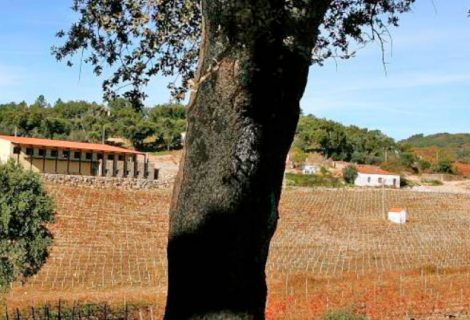 Sogrape adquire a Quinta do Centro no Alentejo